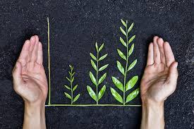 Pequenos negócios estão aderindo à sustentabilidade, segundo pesquisa do Sebrae