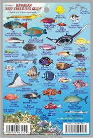 Hawaiian Mini Fish Card Frankos Fabulous Maps Of Favorite