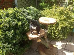 this is the best outdoor cat furniture natural outdoor cat furniture trees