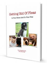 your guide to getting rid of fleas