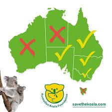 The Koala Endangered Or Not Australian Koala Foundation