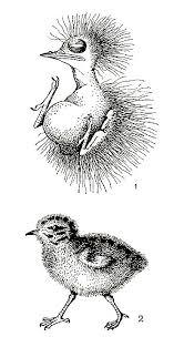 Реферат Класс птицы общая характеристика класса com  Класс птицы общая характеристика класса