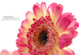 types of flowers in bouquets. beautiful gerberas flowers types of in bouquets