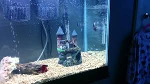 Fish Tank 55 Gallon Fish Tank From Walmart Youtube