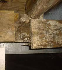 Mold In Basement Your Actionable Guide To RecoveryMold In Basement