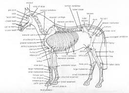 Growth Plate Closure Chart A Safe Start The Reality Of Training Early The Equine