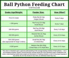 Ball Python Size Chart Corn Snake Weight Chart Corn Snake Feeding Chart By Age
