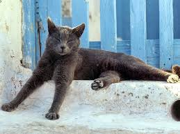 Image result for cats in the sun
