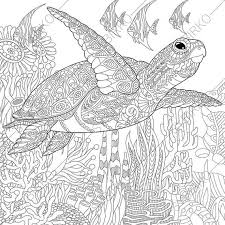Small Picture 3 Coloring Pages of Sea Turtle from ColoringPageExpress Shop Hand