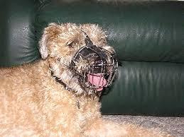 Wheaten Terrier Size Chart Wire Basket Dog Muzzles Size Chart M4light_1 M4 1073