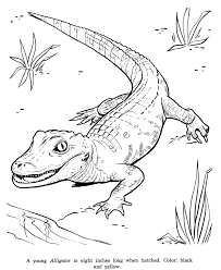 Small Picture Crature fantastique Coloring Pages Dragons Reptiles