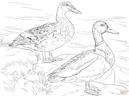 Small Picture Ducks coloring pages Free Coloring Pages