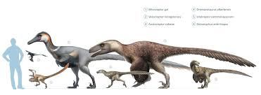 Velociraptor Size Chart Artstation Raptor Squad Size Chart Wikipedia Fred Wierum