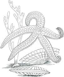 Lost Ocean Coloring Pages 2019 Open Coloring Pages