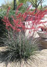 desert plants flowers. Delighful Flowers Desert Plants U2013 Succulents U0026 Cacti Inside Flowers A
