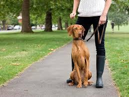 Dog Sitter Rome Fontanacountryinn Com