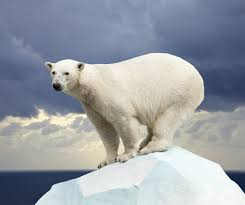 What Happened to the Polar Bear? – Climate Change | Sustainability Academy