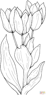 Small Picture Tulips Flower coloring page Free Printable Coloring Pages