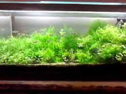 aquarium garden. Delighful Aquarium Aquarium Garden For Garden H