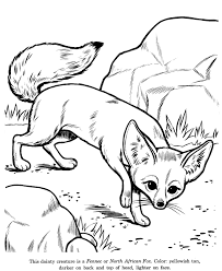 Small Picture Animal Drawings Coloring Pages Fennec North African Fox