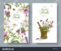 Small Picture Vector Vertical Wild Flowers Herbs Banners Stock Vector 571923877