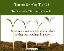 Tomato Seed Growth Chart Tomato Seed Starting Timetable