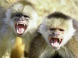 """Résultat de recherche d'images pour """"singes droles"""""""