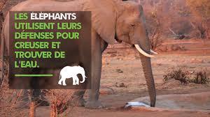 """Résultat de recherche d'images pour """"journée mondiale des éléphants"""""""