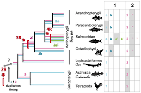 The Timing of Timezyme Diversification in Vertebrates