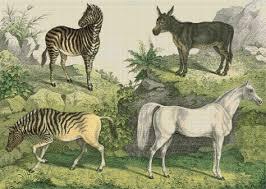 Donkey Zebra Horse Cross Stitch Chart