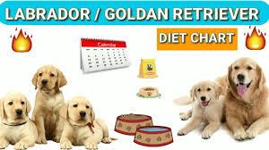 Lab Puppy Food Chart Labrador Diet Chart Golden Retriever Diet Plan In Hindi Dog Diet Plan