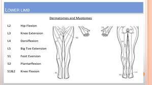 Dermatomes Myotomes Amir