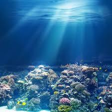 Resultado de imagem para corais da amazonia