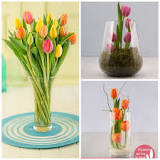 Image result for To Grow Tulip In South Africa