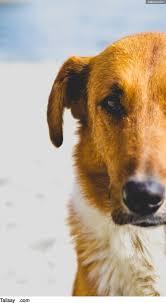 De 50 Mooiste Franse Hondennamen Voor Een Reu Tallsaycom
