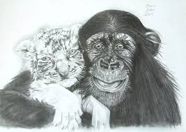 white tiger cubs drawing. Perfect Drawing Nature Drawing  Chimp And White Tiger Cub By Emma Lyon In Cubs