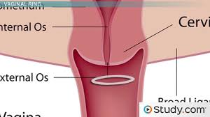 birth control implant how it works hormonal methods of contraception contraceptive patch ring and