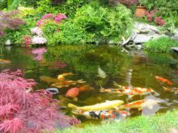 plants for koi ponds lovetoknow