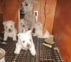 the horrible hundred report released to shine light on worst puppy mills