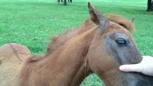 baby horses playing. Modren Baby YouTube Premium With Baby Horses Playing Y