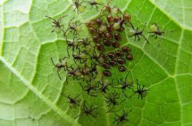garden pest. Organic Bug Control Garden Pest
