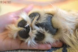 in need of some paw pad moisturizer
