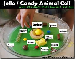 animal cell project candy. Plain Project JellO Animal Cells To Cell Project Candy