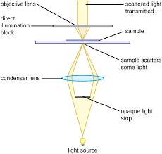 dark field microscopy darkfield microscopy instruments of microscopy by openstax page 3