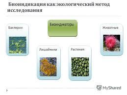 Презентация на тему Министерство общего и профессионального  3 Биоиндикация как экологический метод исследования Бактерии Лишайники Растения Животные