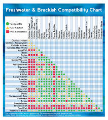 Freshwater Brackish Fish Compatibility Chart Infographic