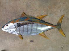 >fish sculpture 24in tropical coastal beach metal wall art fish  fish sculpture 24in tropical coastal beach metal wall art fish pinterest coastal fish and metals