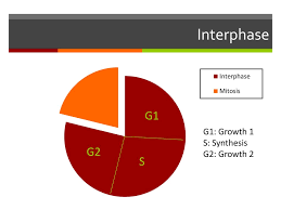 How Do You Grow Give Examples And Be Specific Ppt Download