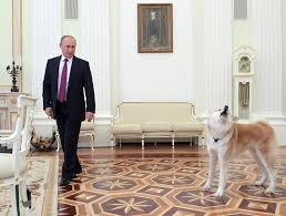russian president vladimir putin enters a hall with his dog yume before giving an interview to