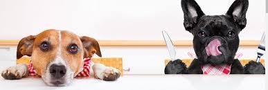 petrics com improving quality of life for you and your pets